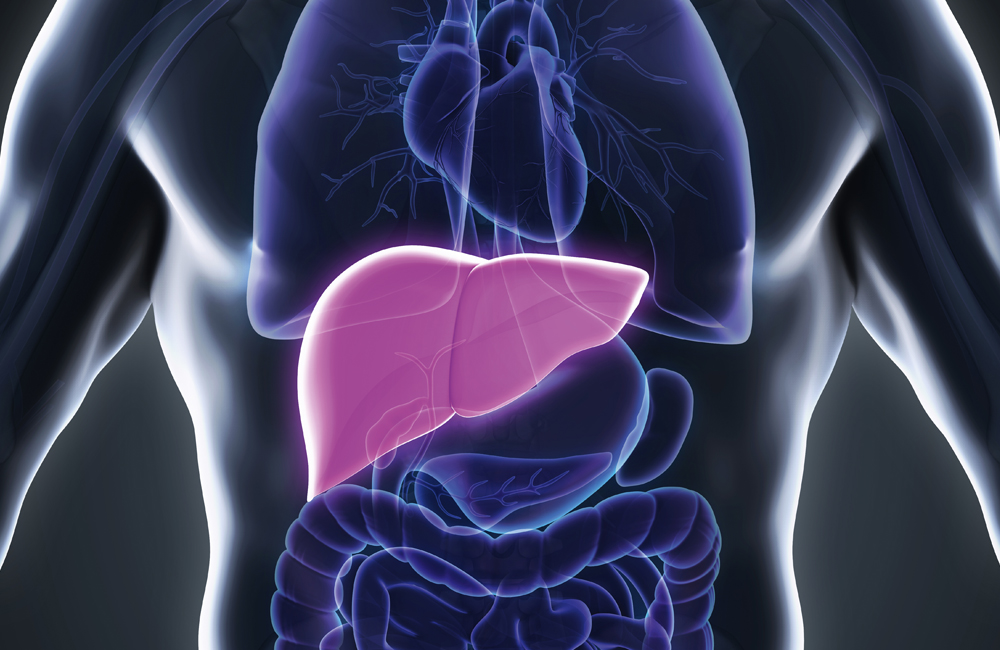 The liver: an essential organ of the human body